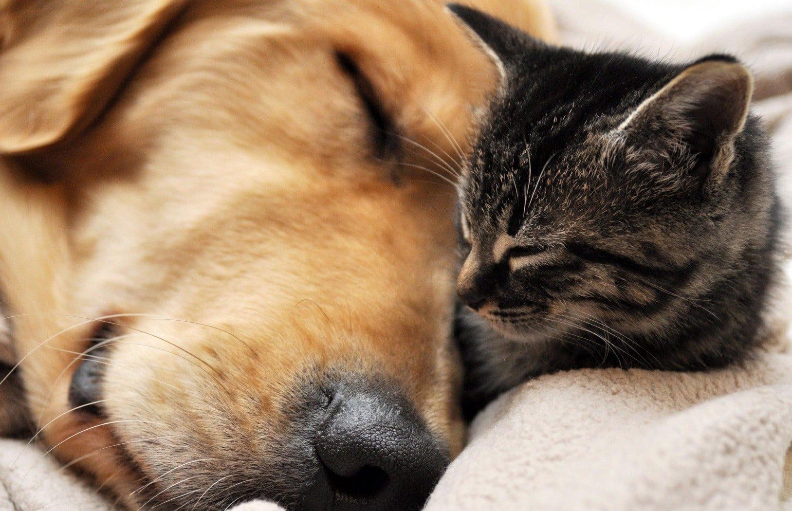 Snuggling cat & dog - pet sitting