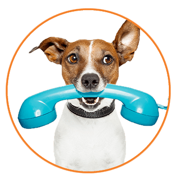 Contact a pet sitter today