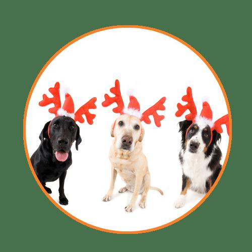Dog Walks & Holidays