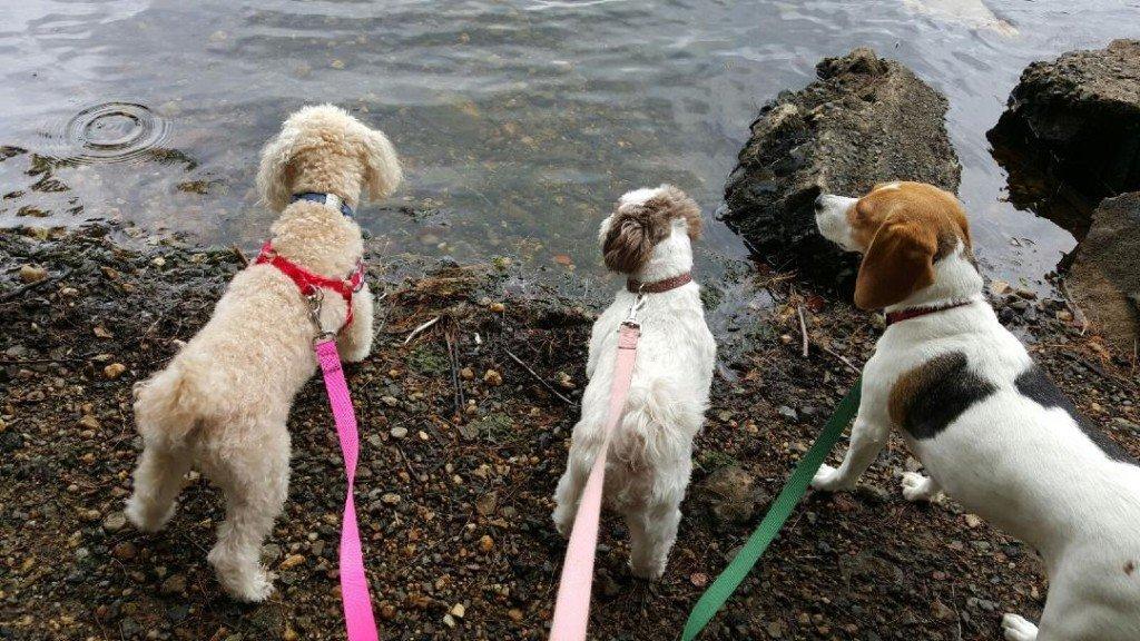 dog walker and pet sitter in massachusetts
