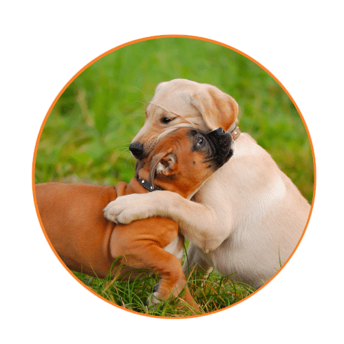 dog walking and pet sitting services in woburn, MA