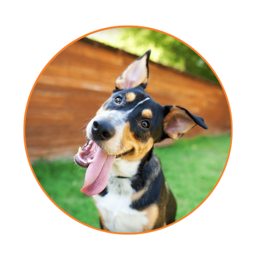 frequently asked questions at muddy paws dog walking and pet sitting, find out the most common questions and the answers to things like, why muddy paws, how do I pay my walker, and what areas do you serve