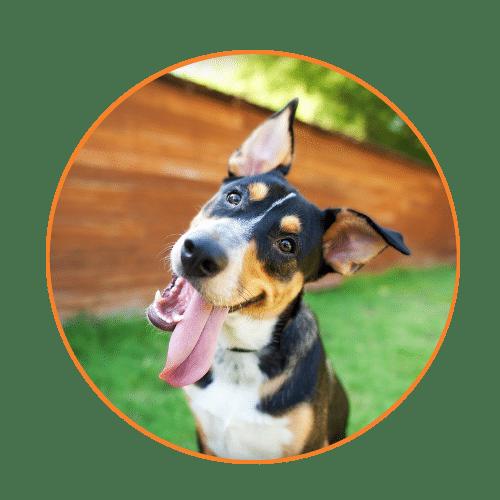 dog walker and pet sitter faq