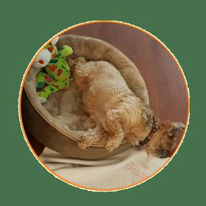 professional pet sitter MA