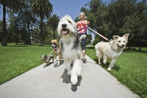 5 reasons to hire a dog walking service like Muddy Paws