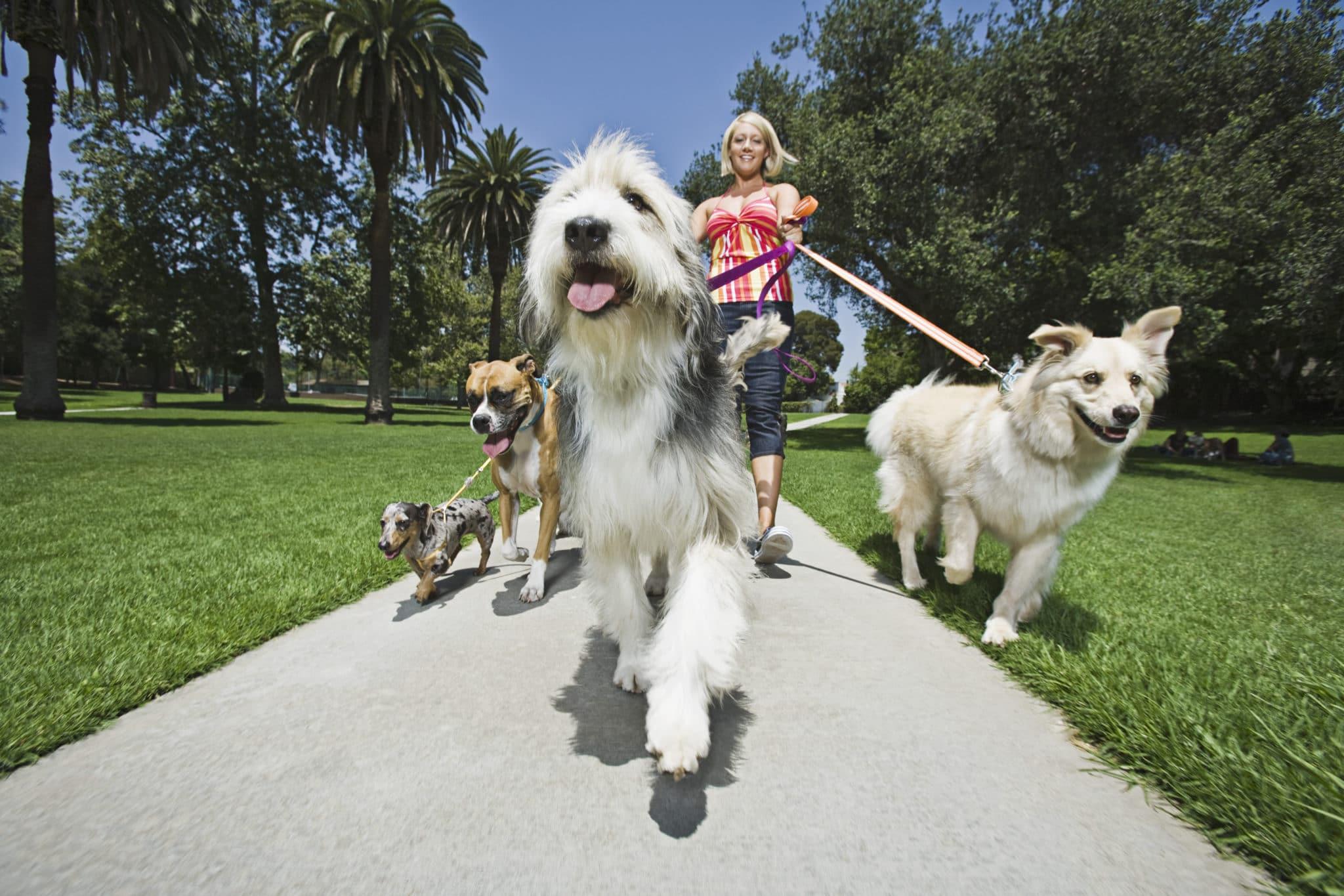 Professional Dog Walking Service