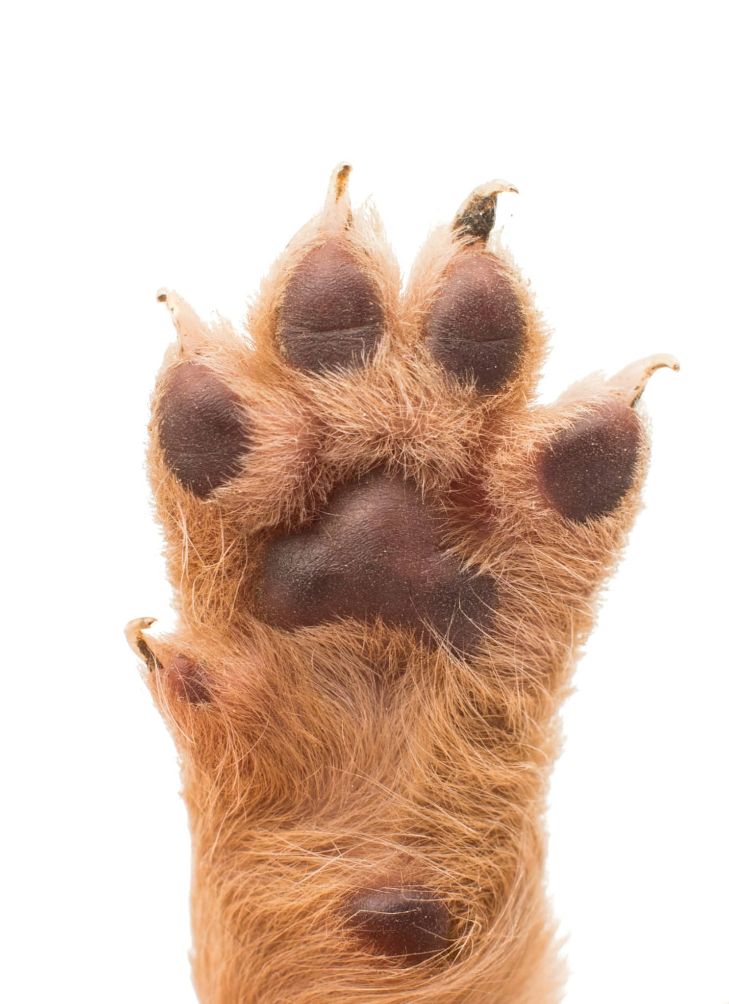 Long nails are not good for pet care