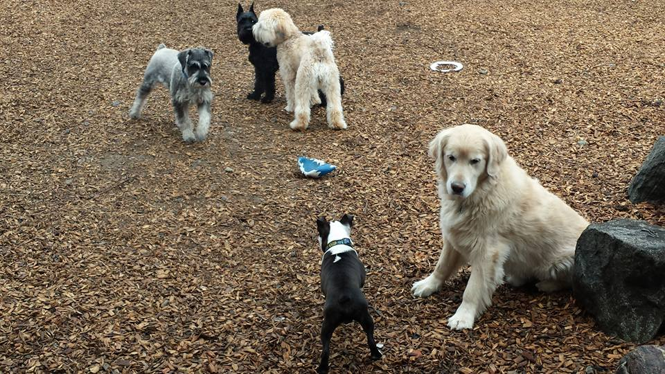 doggie playgroups are a great way to exercise your dog at Muddy Paws