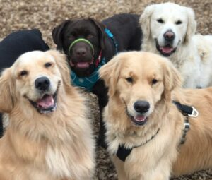 muddy paws dogs are happy dogs and love the socialization they get on their daily midday walks