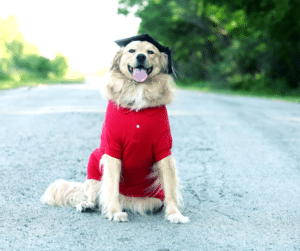 ongoing training for your dog