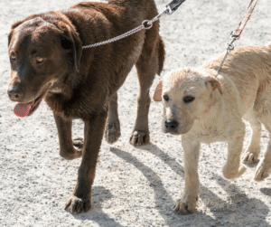 how to train your dog to walk on leash without pulling