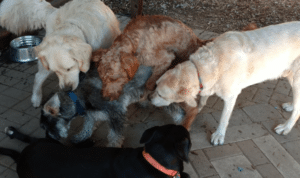 dog socialization with each other by sniffing each other