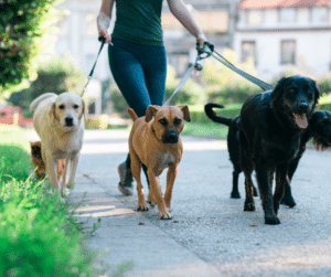 5 epic reasons to hire a dog walker include socialization, peace of mind, freedom, exercise, and ability to travel