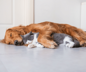 cats and dogs snuggling