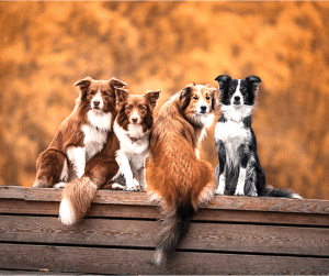 dog socialization keeps your dog happy and healthy