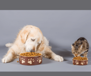 dogs and cats eating keeps them happy and healthy