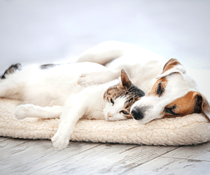dogs and cats sleeping during their pet sitting visits with Muddy Paws