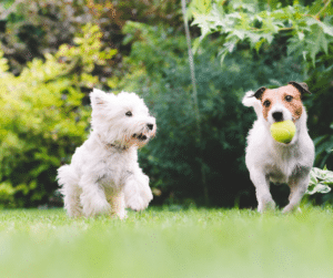 get your dogs exercised as a way to keep them happy and healthy