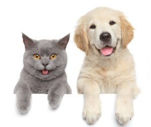 Learn How To Keep Your Pet Happy And Healthy