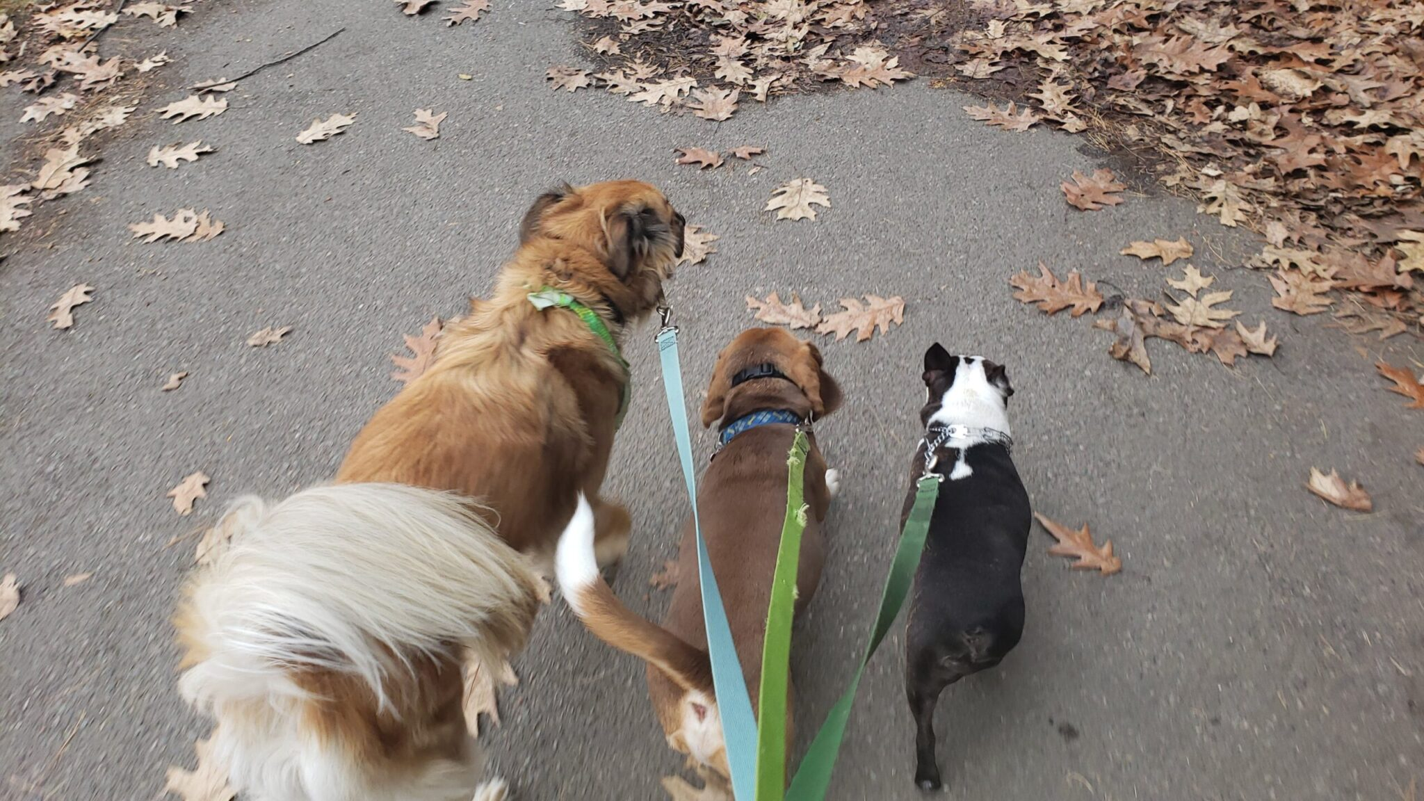 dog walking services by Muddy Paws gives your dog the ability to relieve themselves, walk with other dogs, and drain their energy with exercise
