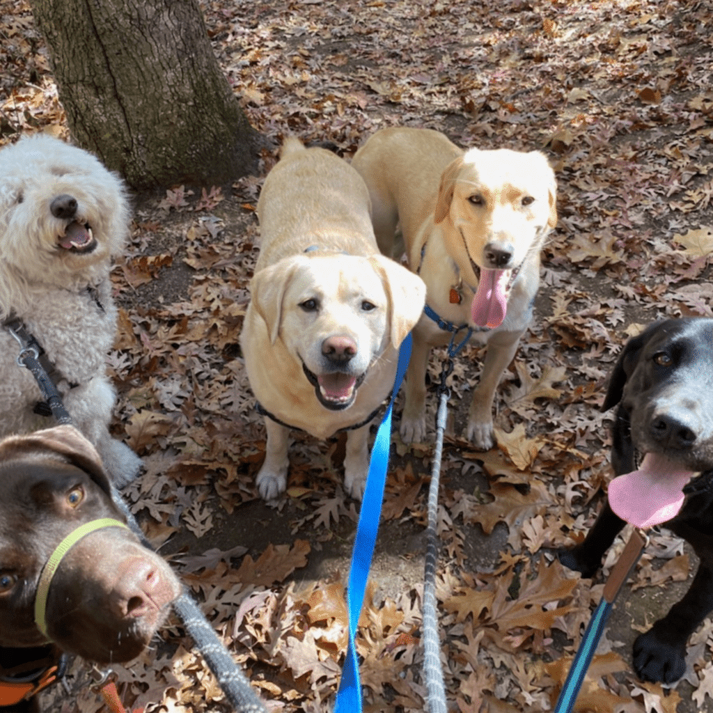 group outings are 90 minute adventures at muddy paws that are our version of doggie daycare that provide lots of exercise for your dog