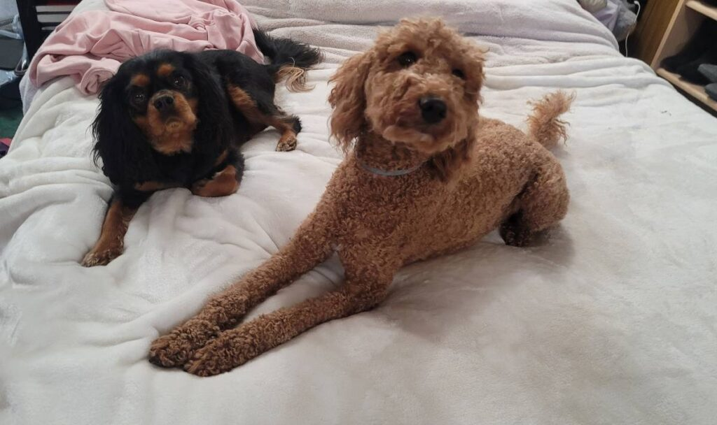 dog boarding at muddy paws is called in our home boarding which means the dogs stay overnight at our houses while the owners travel