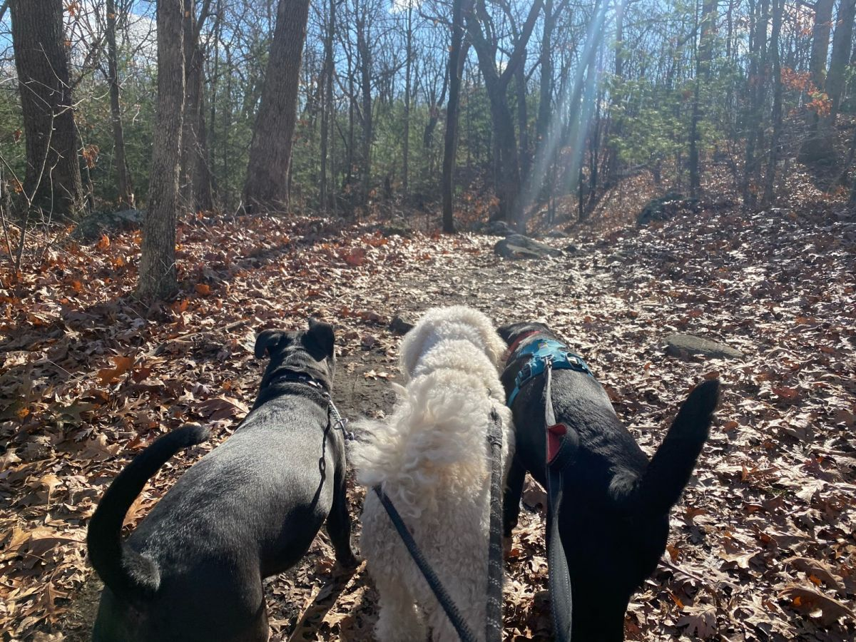 dog walking services with muddy paws include quick relief visits, 30 minute walks, 60 minute walks, and group outings