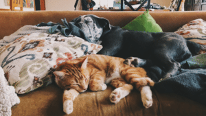 hire a pet sitter to stay overnight at your home to care for your pets