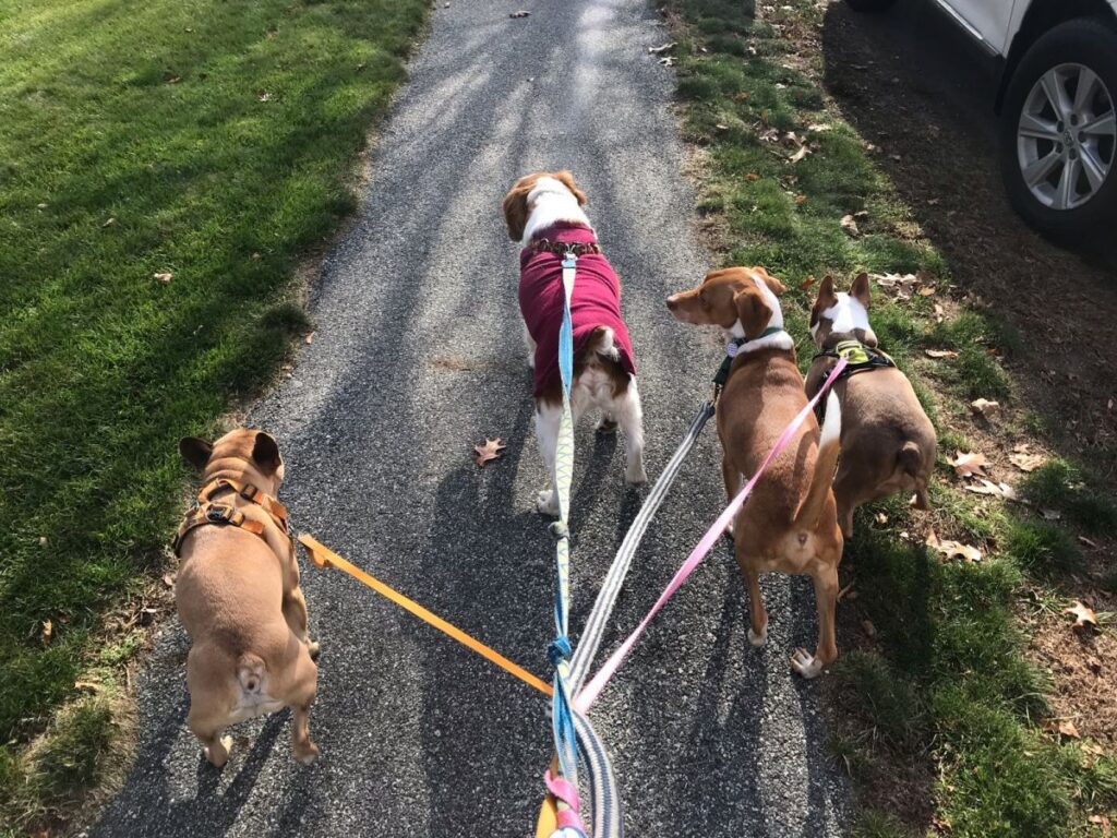30 minute dog walks at muddy paws offer your dog relief breaks, exercise, and socialization with other dogs