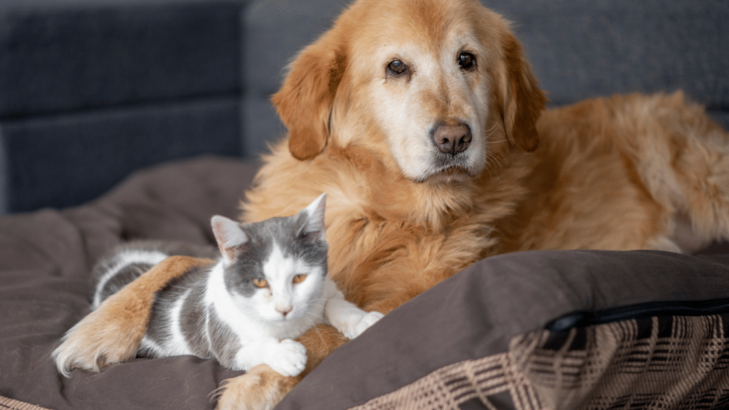 hiring a pet sitter provides your dogs and cats with pet sitting visits are a stress free way to keep your pets out of a kennel and in their own homes.