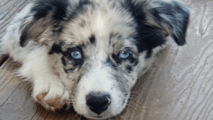 puppies do well with quick relief visits so that they get used to walking on leash in short amounts of time