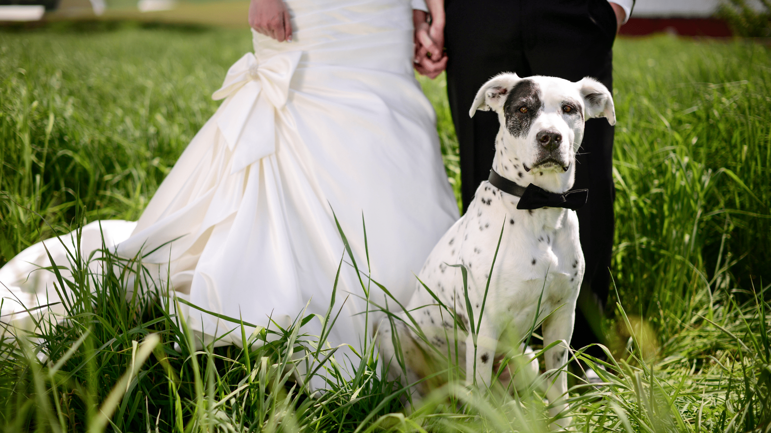 wedding services are part of muddy paws pet care concierge services where we will help you have your dog a part of your wedding day