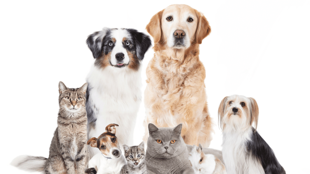 muddy paws offers the best pet care which consists of dog walking, pet sitting, cat sitting, in home boarding, housesitting overnights, and uses the best app technology for billing, sending online journals, and scheduling services